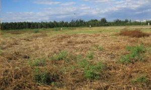 Nghị định 91/2019/NĐ-CP về xử phạt vi phạm hành chính lĩnh vực đất đai