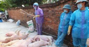 Quyết định 2254/QĐ-TTg về cơ chế, chính sách, đối tượng hỗ trợ, mức hỗ trợ kinh phí trong phòng, chống bệnh Dịch tả lợn Châu Phi năm 2020.